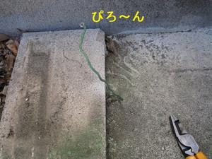 地面から出たアース線